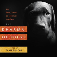 The Dharma of Dogs